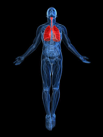 aparato respiratorio: pulm�n resaltada