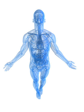 rising body - x-ray Stock Photo - 11073136