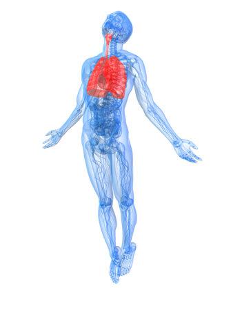 asthma: hervorgehoben Lunge