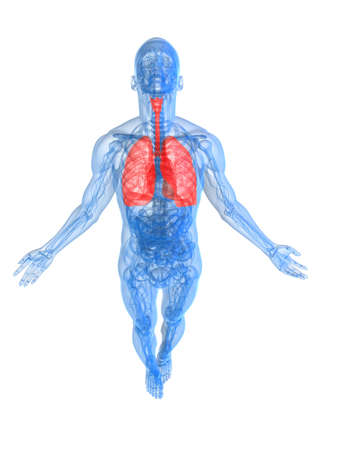highlighted lung photo