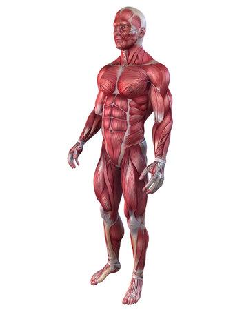 muscular men: bodybuilder pose