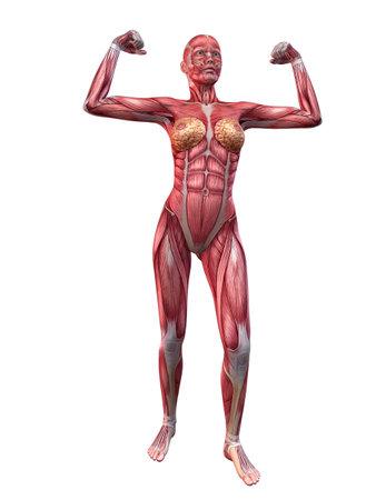 female bodybuilder pose Stock Photo - 11073193