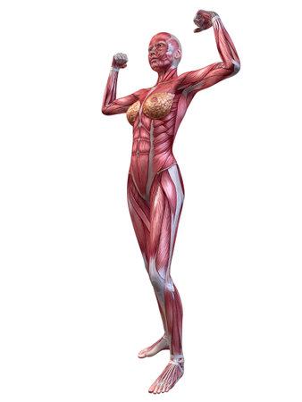 female bodybuilder pose Stock Photo - 11073155