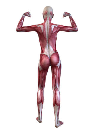 female bodybuilder pose Stock Photo - 11073170