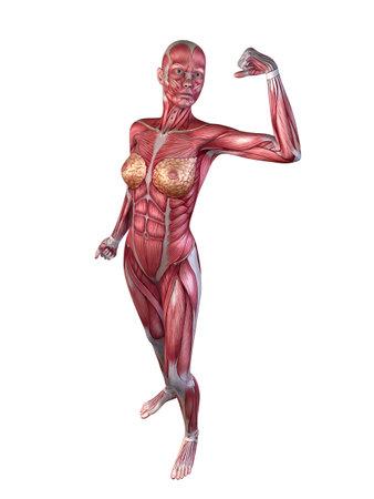 female bodybuilder pose Stock Photo - 11073165