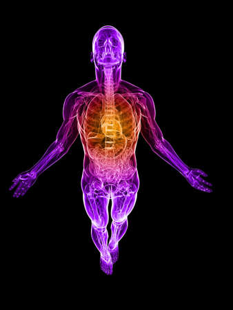 transparent male body with highlighted heart photo