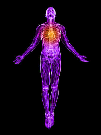 transparent male anatomy: transparent male body with highlighted heart Stock Photo