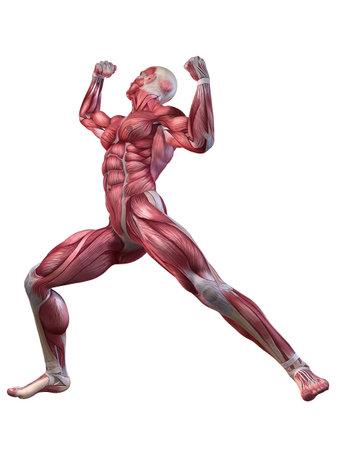 musculo: masculino entrenamiento - posando Foto de archivo