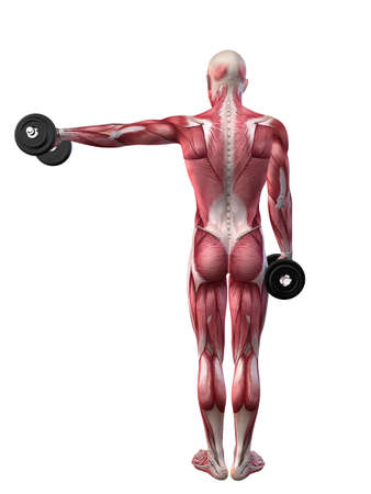 male workout - shoulder workout  Stock Photo - 11073203