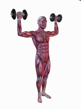 infraspinatus: male workout - shoulder workout