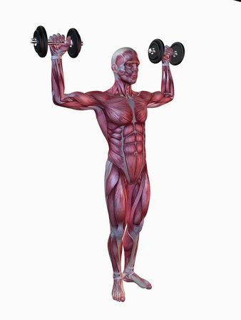 homo sapiens: male workout - shoulder workout