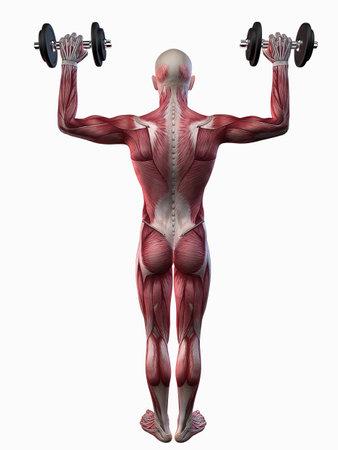 shoulder: male workout - shoulder workout