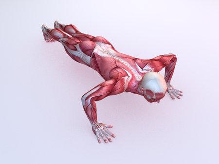 musculo: masculino entrenamiento - flexiones Foto de archivo