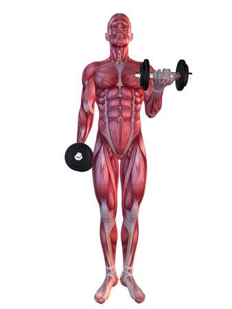 deltoid: male workout - shoulder workout