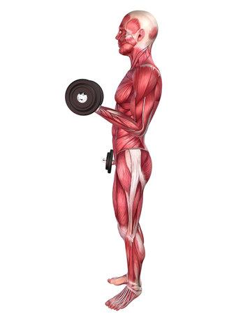 homo: male workout - shoulder workout