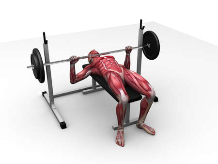 male workout - bench press  Stock Photo - 11062743