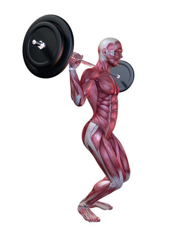 male workout - squats  Stock Photo - 11062797