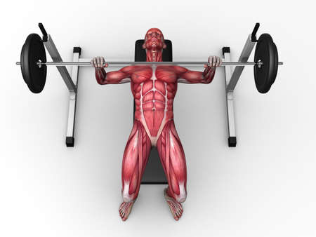 male workout - bench press  photo