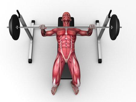 male workout - bench press Stock Photo - 11062837
