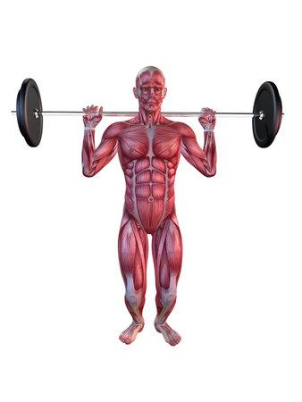 squat: male workout - squats
