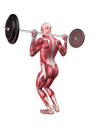 male workout - squats  photo