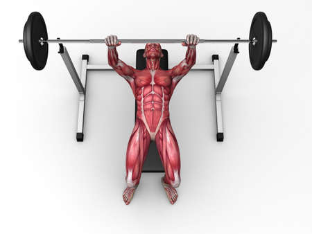 triceps: 3d muscle model - triceps workout