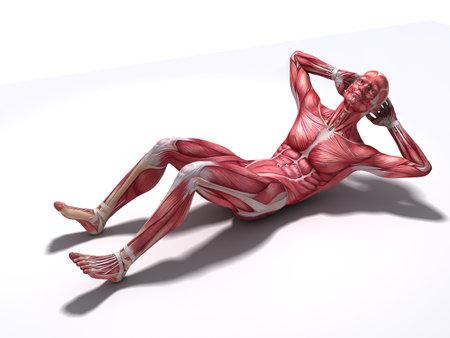 homo sapiens: male workout - crunches  Stock Photo