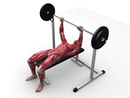 3d muscle model - triceps workout Stock Photo - 11062765
