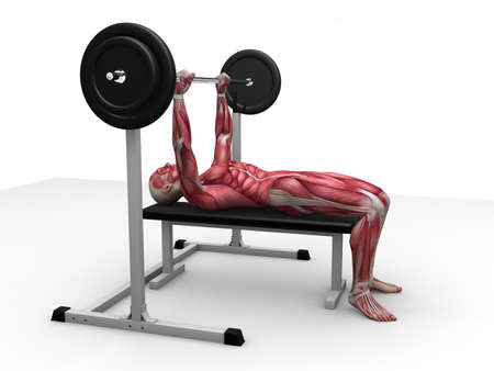 3d muscle model - triceps workout Stock Photo - 11062770
