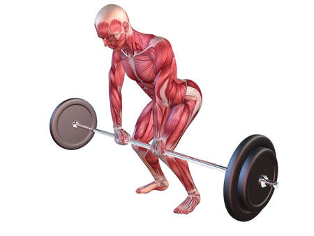 homo sapiens: male workout - upper back  Stock Photo