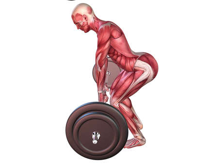 male workout - upper back  Stock Photo