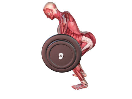 male workout - upper back  Stock Photo - 11062722