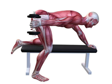 3d muscle model - triceps workout Stock Photo - 11062815