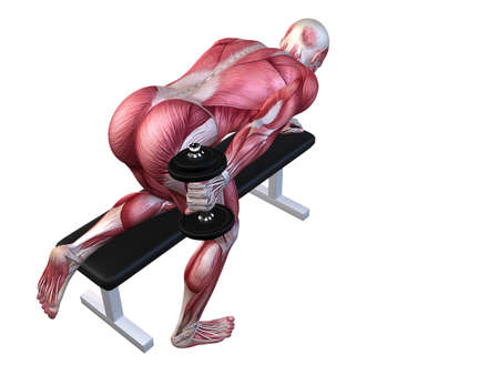 homo: 3d muscle model - triceps workout