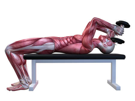 3d muscle model - triceps workout  photo
