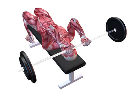 3d muscle model - triceps workout