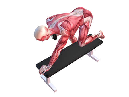 homo sapiens: 3d muscle model - triceps workout
