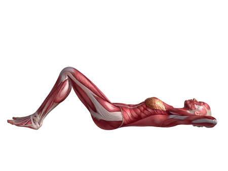 anatomy muscle: female abs workout  Stock Photo