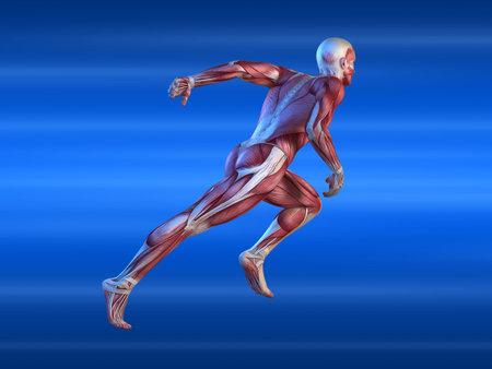 anatomic: male sprinter