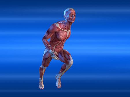 sinew: male sprinter