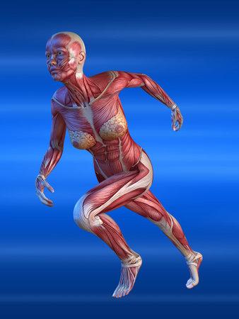 musculature: female sprinter
