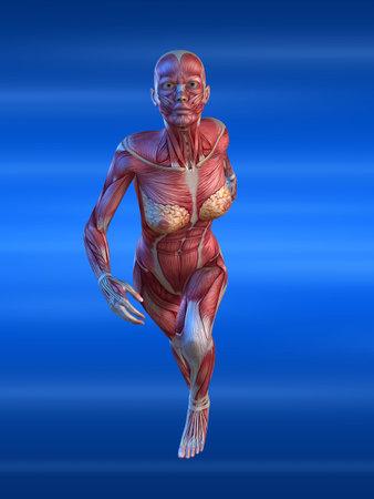 anatomically: female sprinter