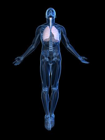 polmone: rivolta del corpo umano Archivio Fotografico