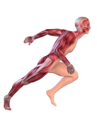 body check: male sprinter