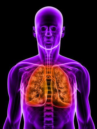 polmone: polmone evidenziato