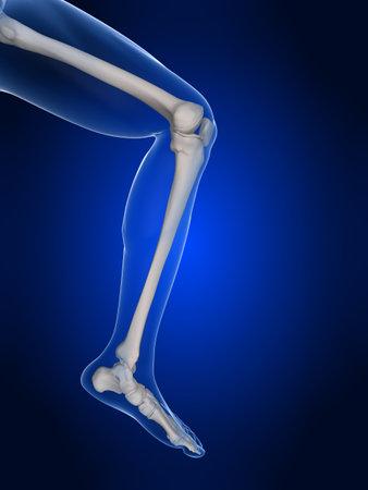 rheumatism: human knee illustration  Stock Photo