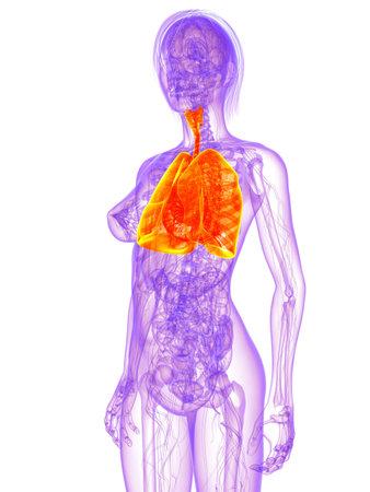 dolor de pecho: anatomía femenina - de pulmón