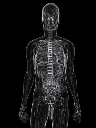 vitals: x-ray - anatomy illustration  Stock Photo