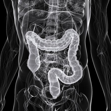 intestino: x-ray - Ilustración anatomía - colon