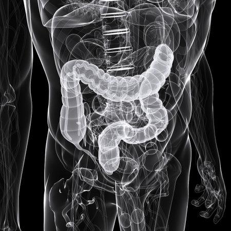 colon: x-ray - illustrazione anatomia - colon